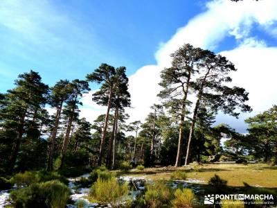 Valsaín - La Chorranca; clubes de montaña isla de la palma cantalojas majaelrayo tornavacas